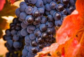 Wine Wars: The Past, Present and Future of Rioja