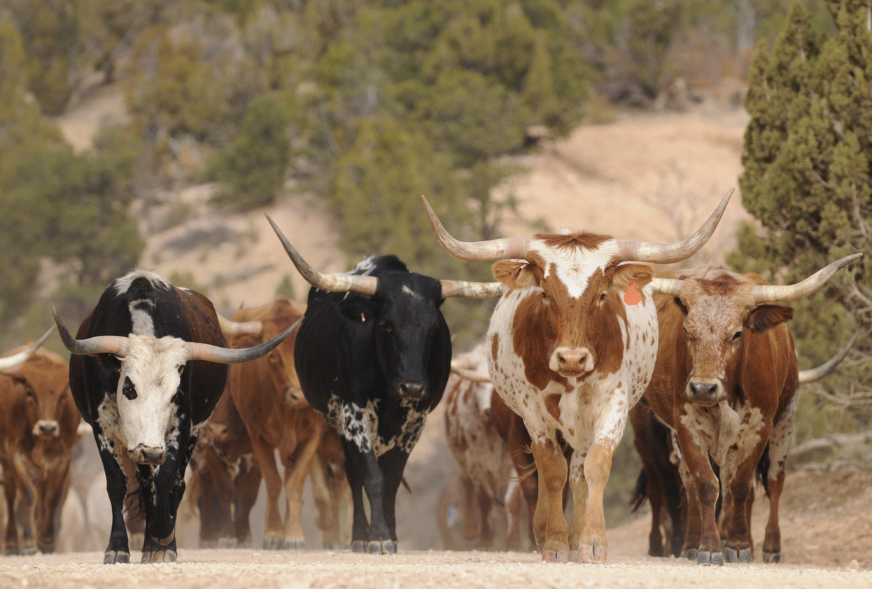 The herd mentality is no way to choose investments