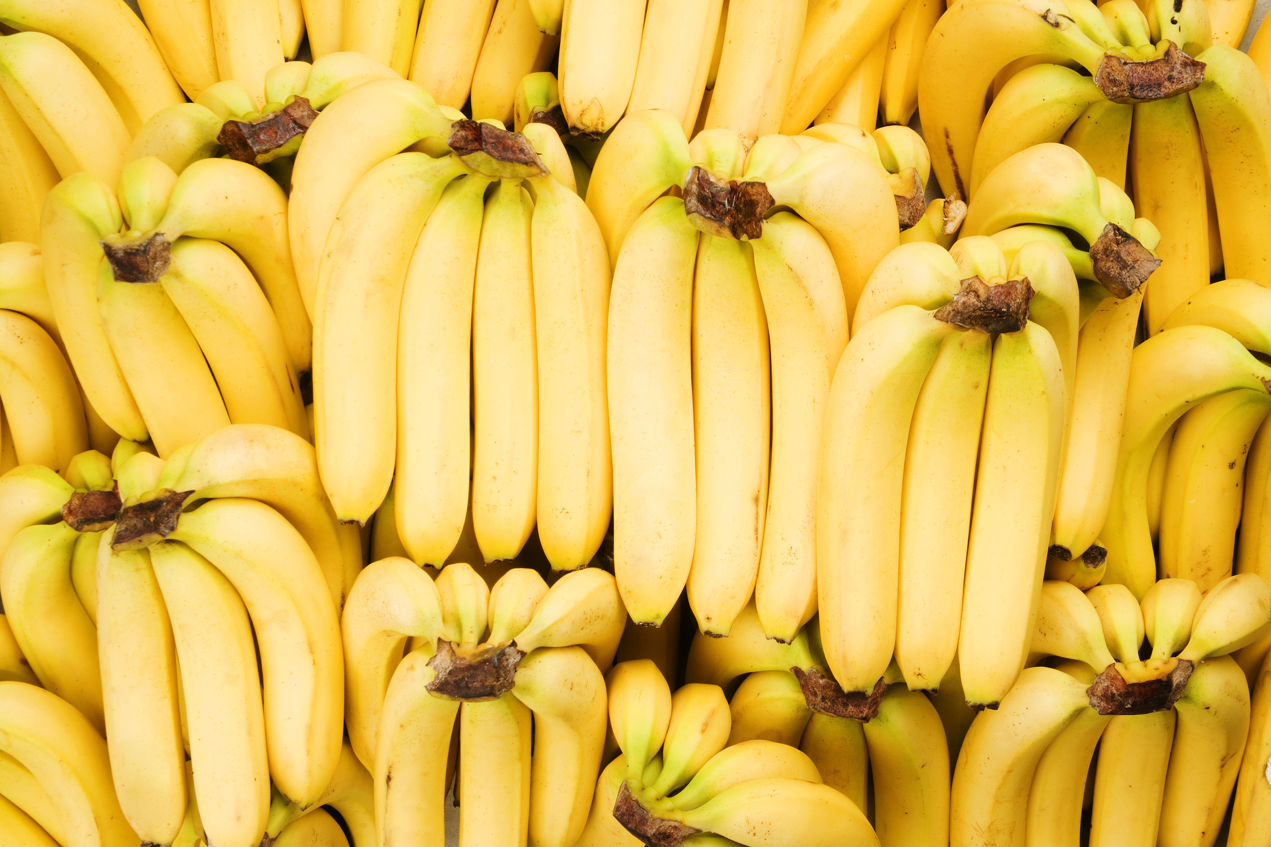 Scientist Racing To Save The Banana From Extinction