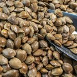 Walnuts & Pistachios Boost Brain Function