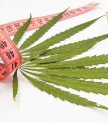Cannabis Less Dangerous Than Alcohol