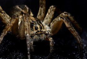 ROM Spiders